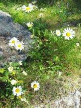 Sunshine and flowers.