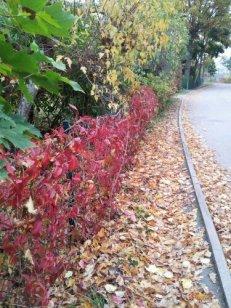 ...walking the suburbs of Danderyd in Stockholm.