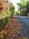 Walking the leafy suburbs: sunshine.