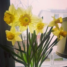 Daffodils from my Mum.
