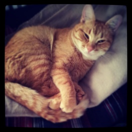 My Tiger cat.