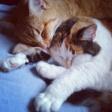 Tiger and Mina